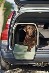 Transportbur för hund L